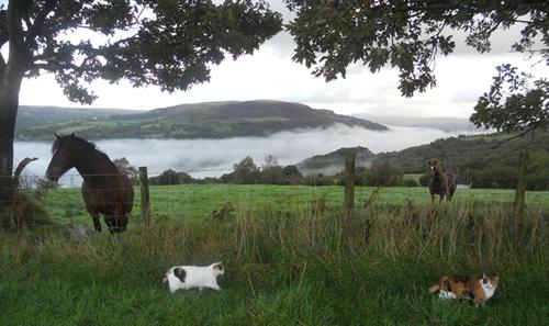 Wales Cottage Breaks